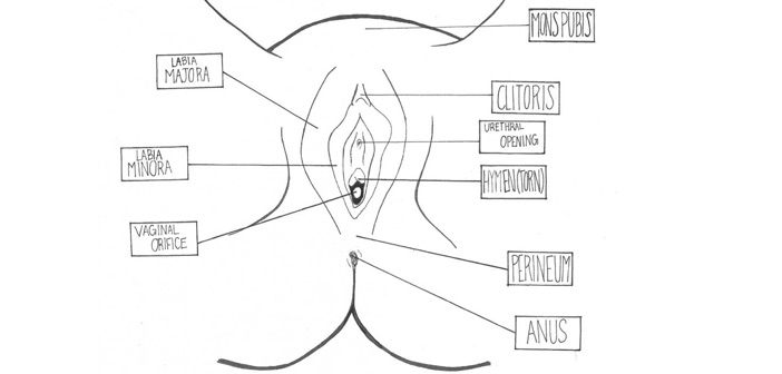 vulva diagram